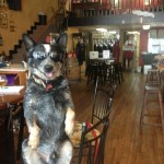 One of our favorite regulars!